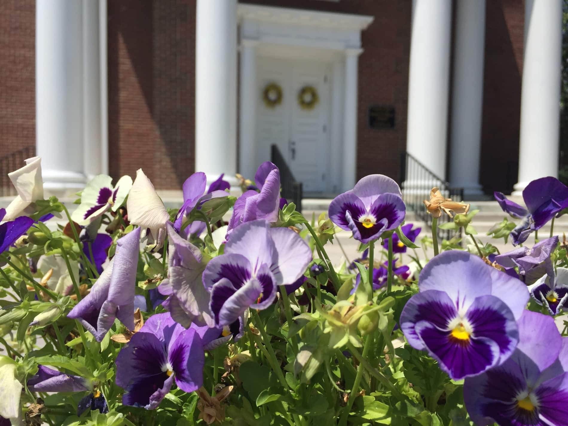 View of church portico with flowers in foreground